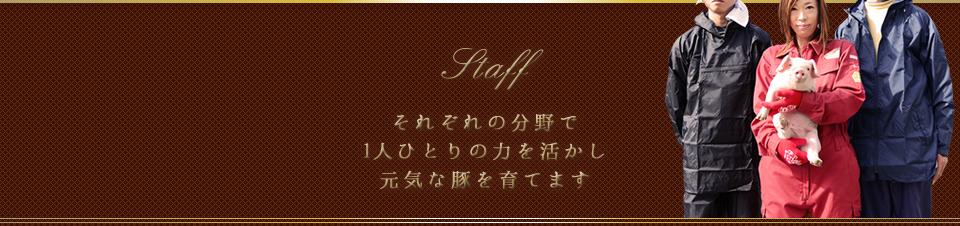 スタッフ紹介【養豚部】