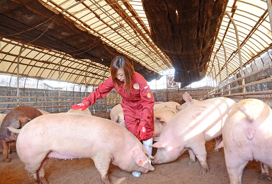 母豚のハウス豚舎2