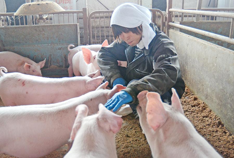 子豚専用豚舎2